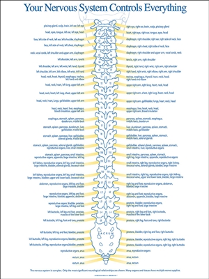 Nervous System Chart Chiropractic Charts Patient Media