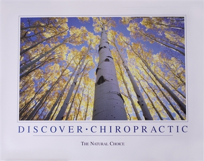 Chiropractic Trees Poster Chiropractic Wall Art